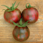 Tomato Black Vernissage